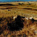 81. Bear Paw Battlefield, Chinook, Montana, 1987.
