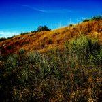 47. Buffalo Hunters Ridge, Sappa Creek Massacre Site, Rawlins County, Kansas, 2010.