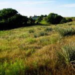 48. Sappa Creek Massacre Site, Rawlins County, Kansas, 2010.