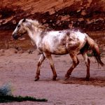 252. Spirit Horse, Canyon de Chelly, Chinle, Arizona, 2013.