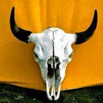 52. Whiteman's Beast, Little Bighorn, Montana, 1995.