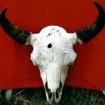 192. Buffalo Skulls, Crow Agency, Montana, 2008.